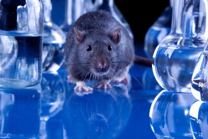 Unilever Global Ban on Animal Testing